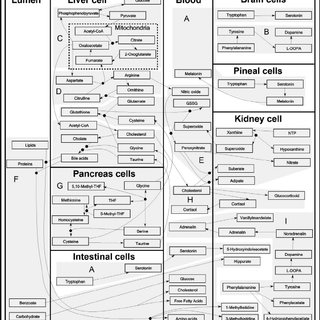 (PDF) Metabolism in Chronic Fatigue Syndrome