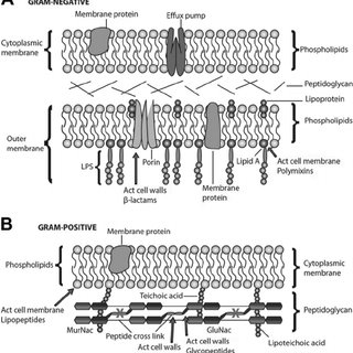 (PDF) Bacterial resistance mechanism: what proteomics can