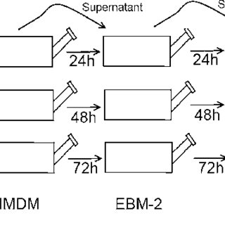 MSCs a, b, c, EPCs d, e, f and HSCs g, h, i were isolated