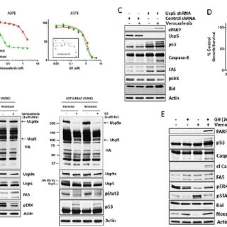 Usp5 regulates p53-mediated cell death. A. Control, Usp5