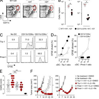 Deprivation of RA signaling causes a selective loss in the