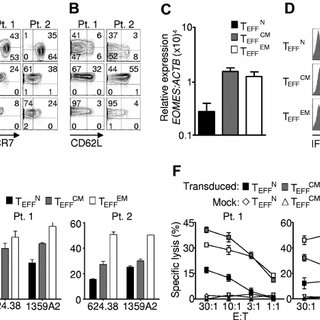 (PDF) Human effector CD8+ T cells derived from naive