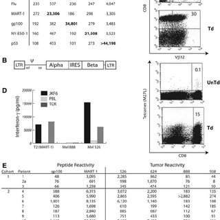 (PDF) Cancer Regression in Patients After Transfer of