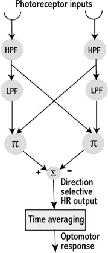 Hassenstein-Reichardt (HR) model. Input from each visual