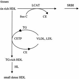 The metabolism of VLDL. Very low density lipoprotein (VLDL