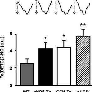 (PDF) Stoichiometric Relationships Between Endothelial