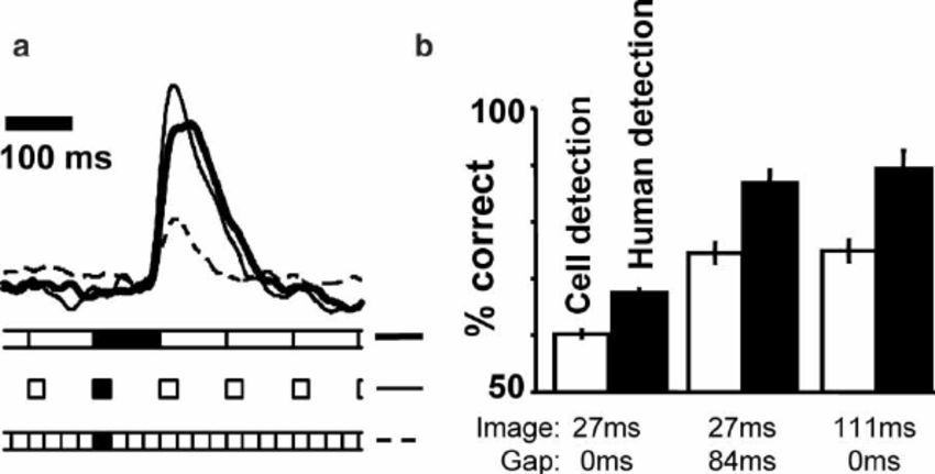 Backward masking: competitive interaction between cell