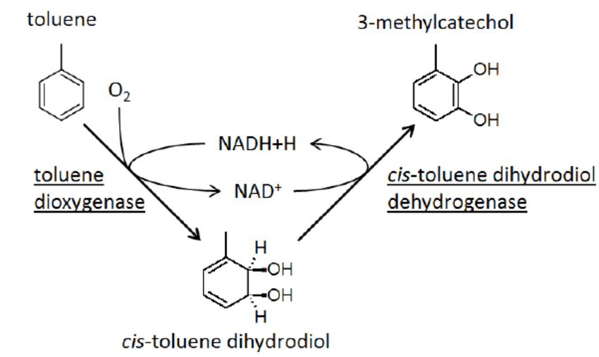 Non-Pathogenic pseudomonas as platform for industrial