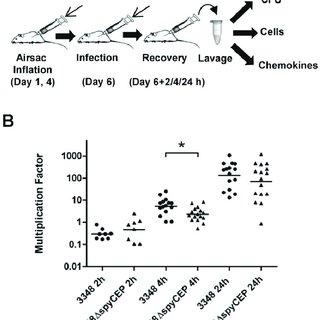 (PDF) Streptococcus pyogenes SpyCEP Influences Host