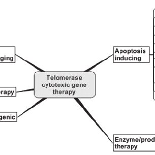 (PDF) Targeting Telomerase: Therapeutic Options for Cancer