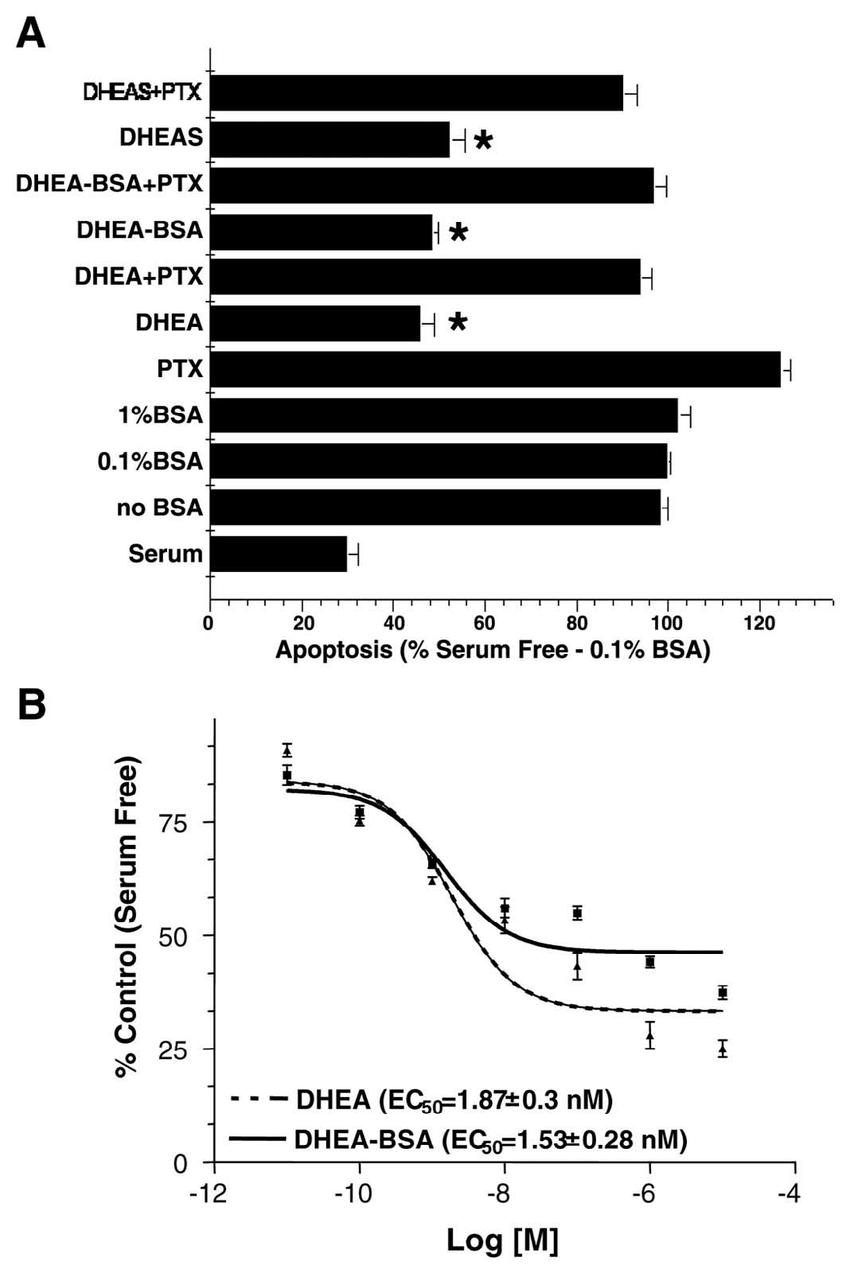 hight resolution of dhea bsa protected pc12 cells against serum deprivation induced apoptosis in a pertussis toxin ptx reversible manner cells were cultured either in