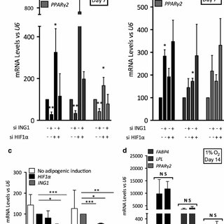 ING1b modulates adipogenesis process in hypoxia. ING1b and