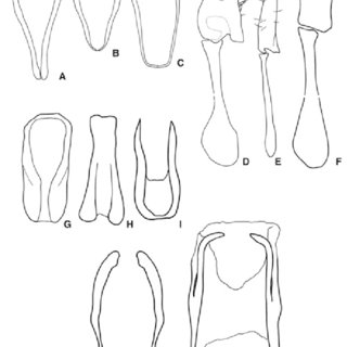 Dorsal and lateral habitus photographs of holotype of