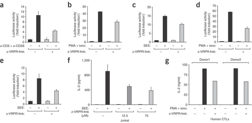 The proteolytic activity of the paracaspase MALT1 is key