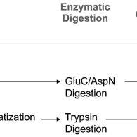 (PDF) Quantitative Proteomic Approaches to Studying