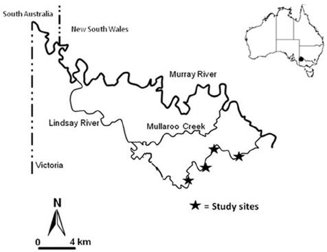 Map of the study area; Lindsay River, Victoria, Australia