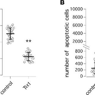 Evaluation of thymosin α-1 (Tα-1) effect on F508del-CFTR