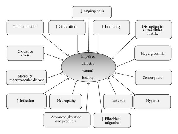 Some of the underlying pathogenesis of impaired diabetic