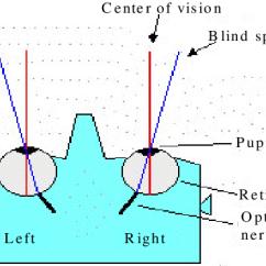Human Eye Diagram Blind Spot Hyundai Santa Fe Parts Spots In The Download Scientific