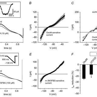 (PDF) Differential phospholipase C-dependent modulation of