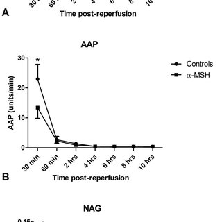 Urine flow was significantly lower in the α-MSH group