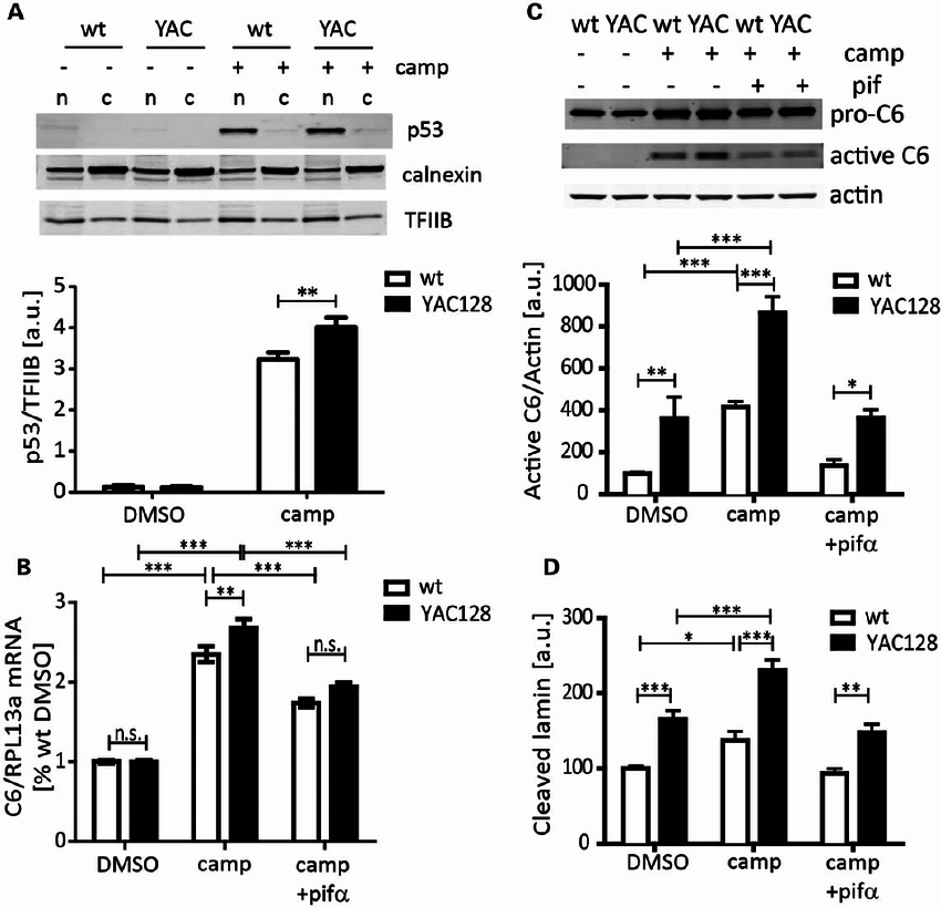ncreased caspase-6 expression and activity in YAC128 MEFs