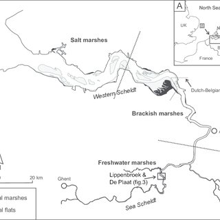 (PDF) Groundwater flow in freshwater tidal marshes: a