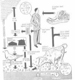 the life cycle of taenia saginata [ 850 x 978 Pixel ]