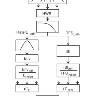 (PDF) A two‐path model of auditory modulation detection