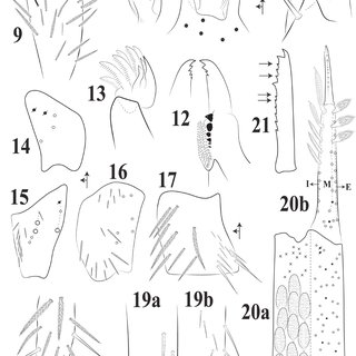 (PDF) A New Epigeous Species of Troglobius (Collembola