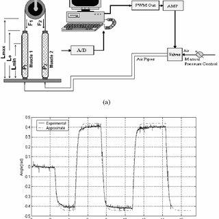 (a) Geometry of pneumatic muscle actuator. (b) Actuator
