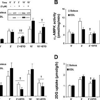 (PDF) Possible CaMKK-dependent regulation of AMPK