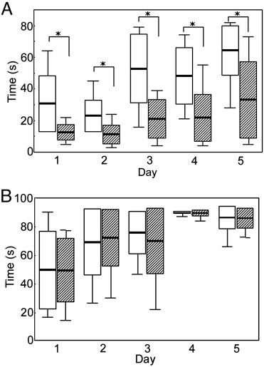 Box plot of rota-rod performance in 7-month-old mice. Five