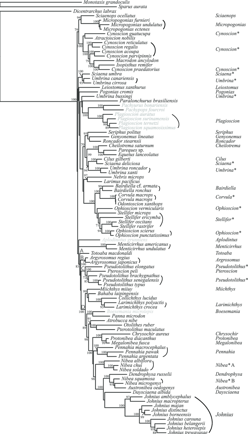 Phylogenetic tree of the Sciaenidae constructed with the