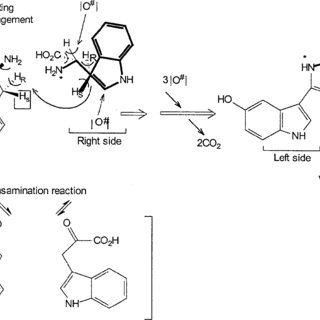 (PDF) Chromobacterium violaceum : A Review of