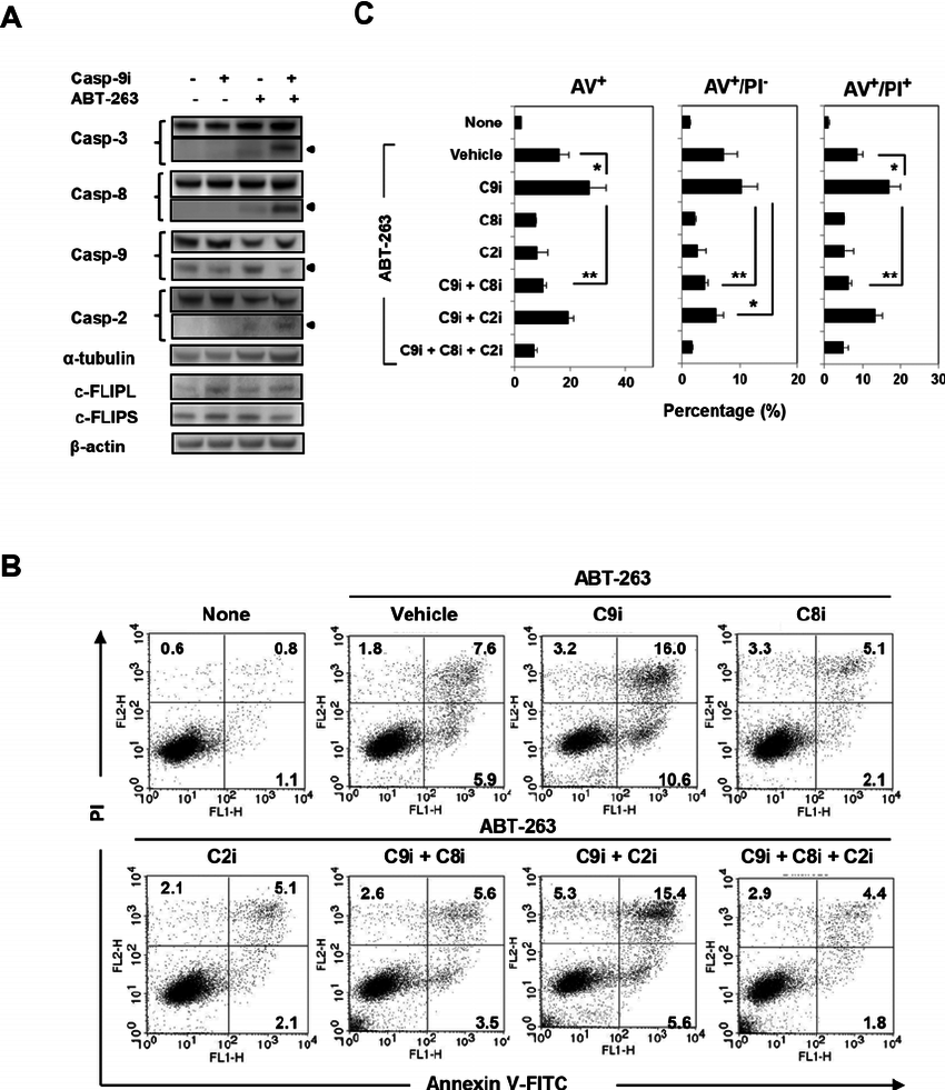 Analysis of caspase-8-dependent ABT-263-induced apoptosis