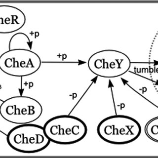 (PDF) Protein-protein Interaction Network Prediction by