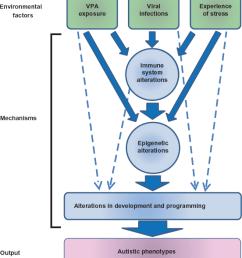 possible pathogenic mechanisms of autism by environmental factors download scientific diagram [ 850 x 977 Pixel ]