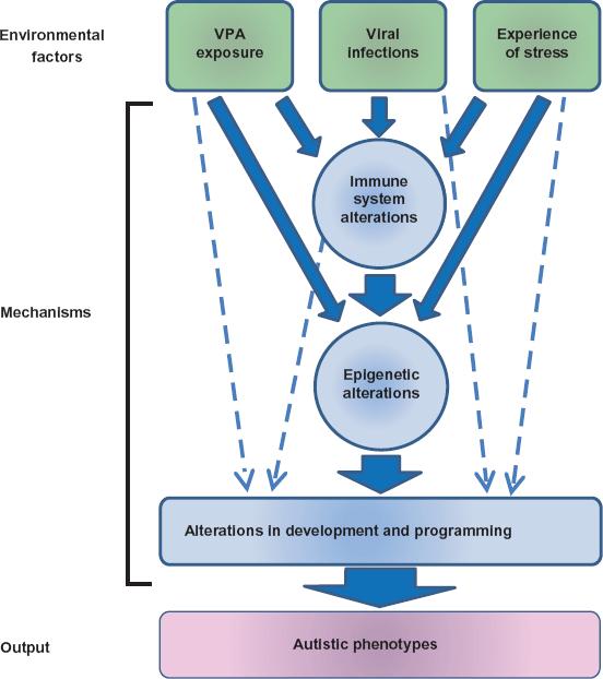 medium resolution of possible pathogenic mechanisms of autism by environmental factors download scientific diagram