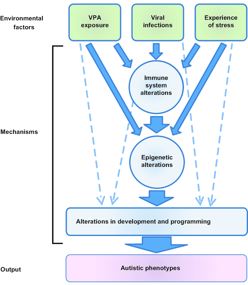 hight resolution of possible pathogenic mechanisms of autism by environmental factors download scientific diagram