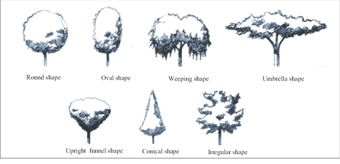Different types of the trees shape