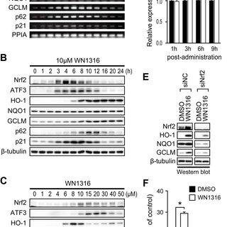 (PDF) A Novel Acylaminoimidazole Derivative, WN1316