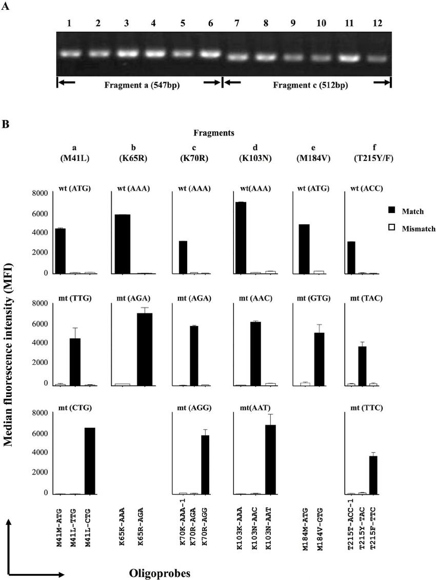 Validation of PCR-SSOP-Luminex assay using plasmids as