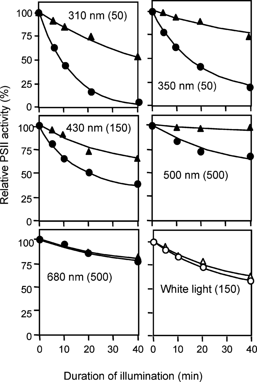 hight resolution of photodamage to psii in untreated thylakoid membranes by monochromatic light at various wavelengths thylakoid membranes