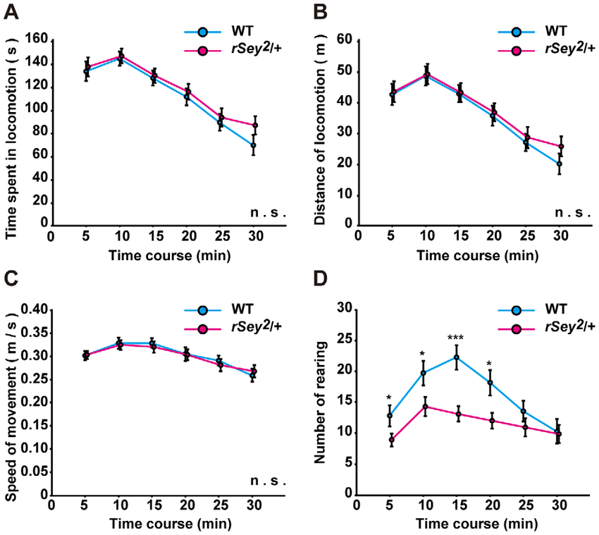 General motor activity of WT and rSey 2 /+ rats in an open