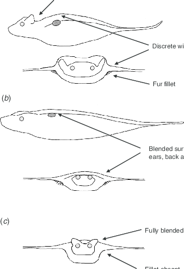 Wing–body blending in bats. (a) Lateral and anterior views