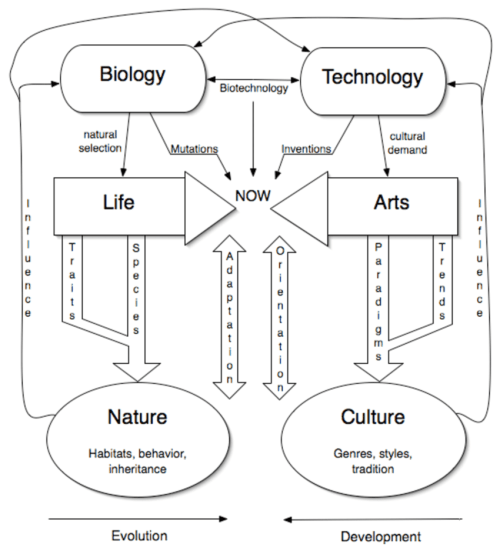 small resolution of a diagram demonstrating the mirror processes of evolution of life and development of the