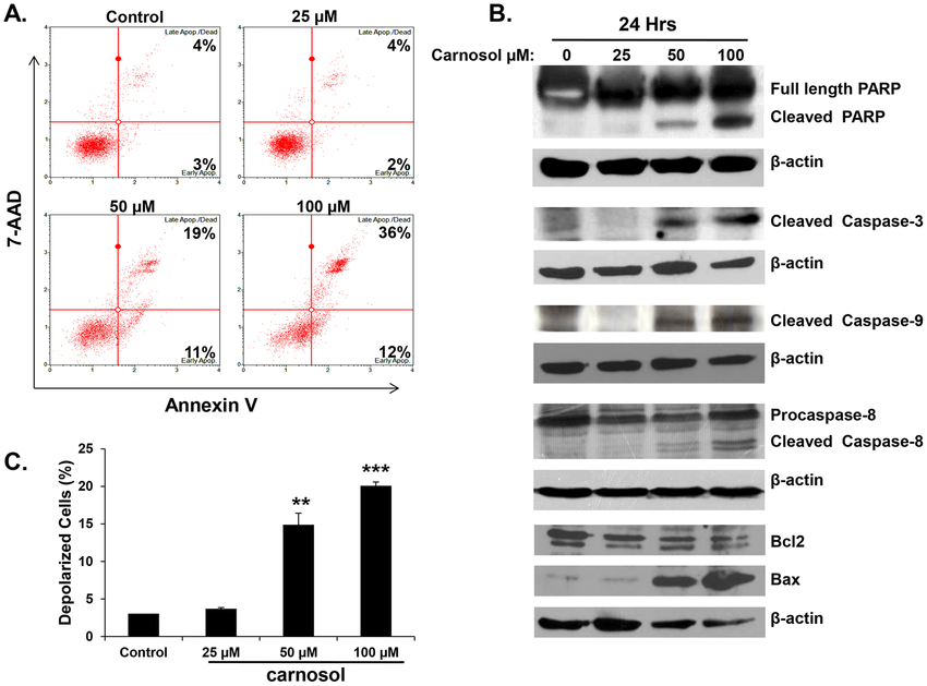 Induction of caspases-mediated apoptosis by carnosol in