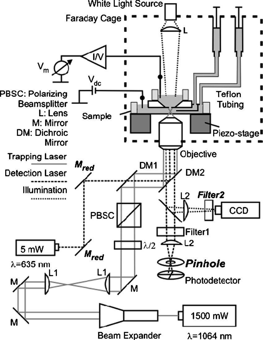 Schematic of the optical tweezers setup. Two lasers