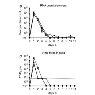 (PDF) Japanese encephalitis virus tropism in